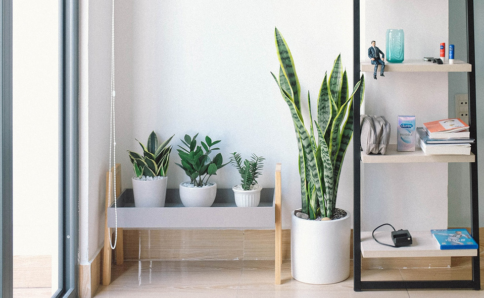 Las plantas juegan un rol importante en el ambiente